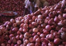 Dubai onions